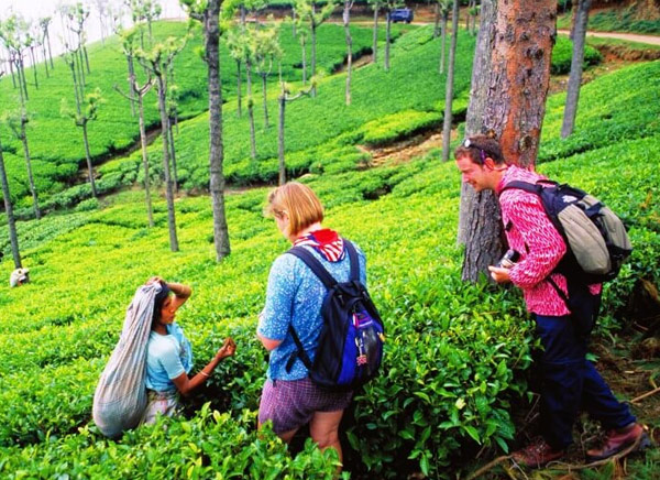 same Day Explore Beauty of Kerala With Munnar