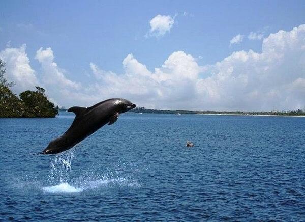 Dolphin in Goa