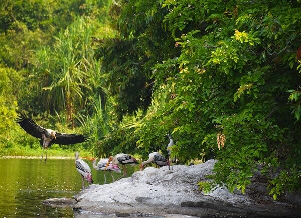 Salim Ali Bird Sanctuary Goa