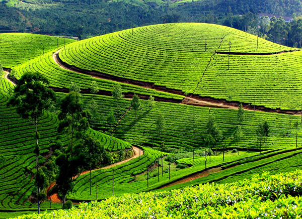 12 Days South India Tour from Mumbai