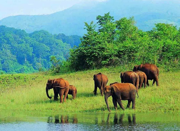 14 Days Kerala Wildlife Tour