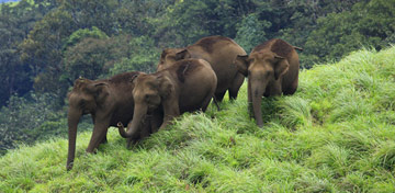 Popular Wildlife Sanctuaries in Kerala