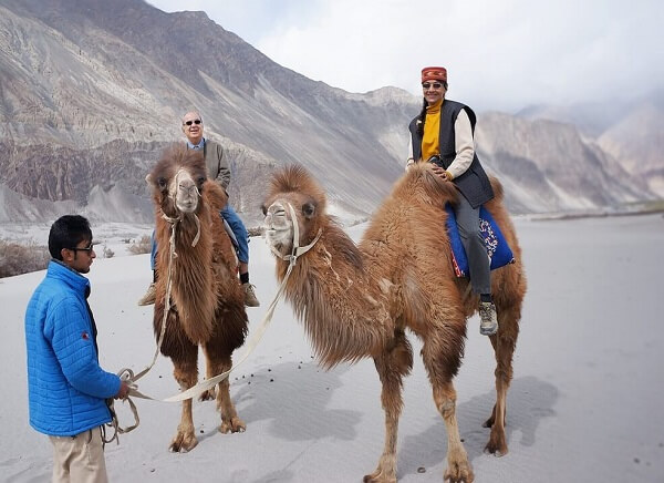 9 Days Camel Safari In Ladakh