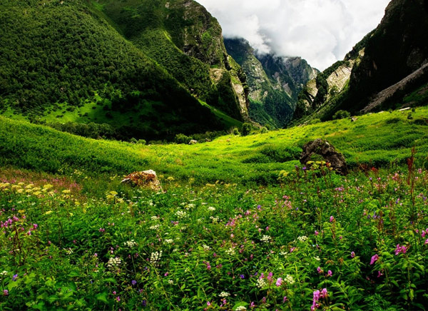4 Nights Valley of Flowers Ladakh