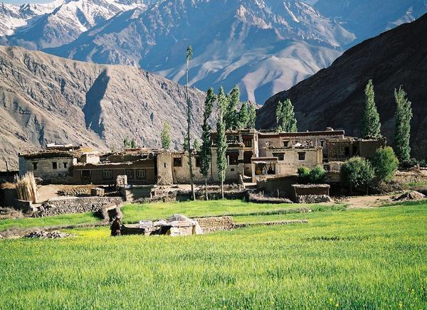 Yangthang Ladakh