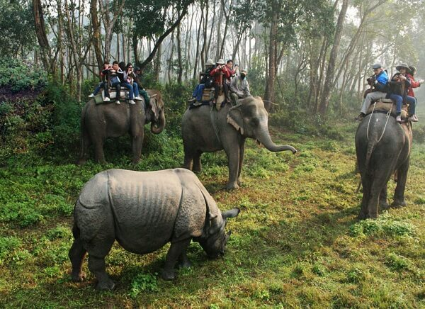 Chitwan National Park Elephant Safari