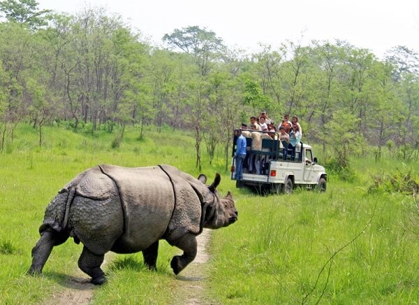 Chitwan National Park Jeep Safari