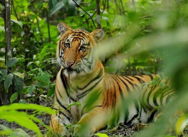 Chitwan Safari in Nepal