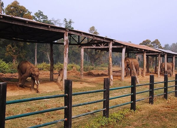 Elephant Breeding Center Nepal