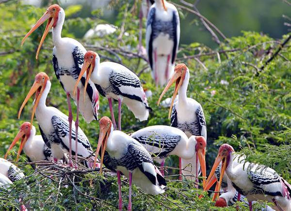 8 Days Golden Triangle with Bharatpur Tours