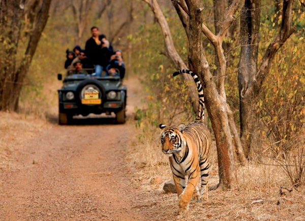 3 Days - Ranthambore Tour From Delhi