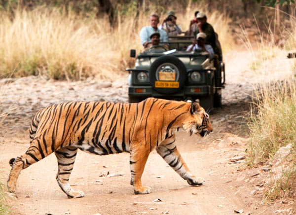 8 Days Delhi Agra Jaipur with Ranthambore Tour