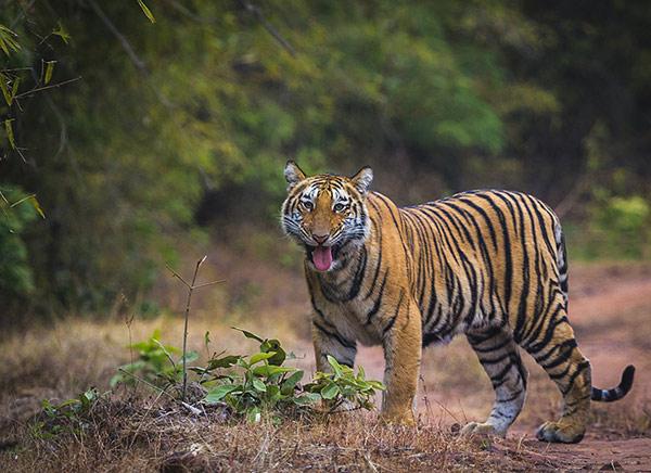 14 Days - Wildlife Safari India