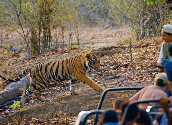 13 Days - Wildlife Photography Tours India