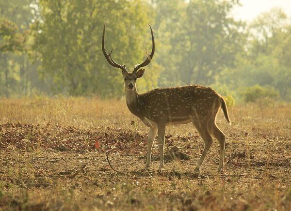 Bandhavgarh Wildlife Species