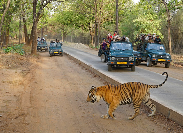 8 Days - Delhi Agra Jaipur with Rajasthan Wildlife Tour