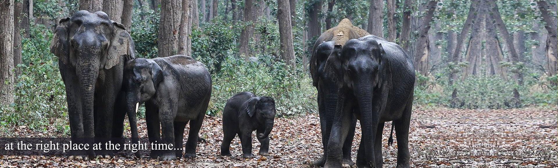 Corbett Elephant Safari