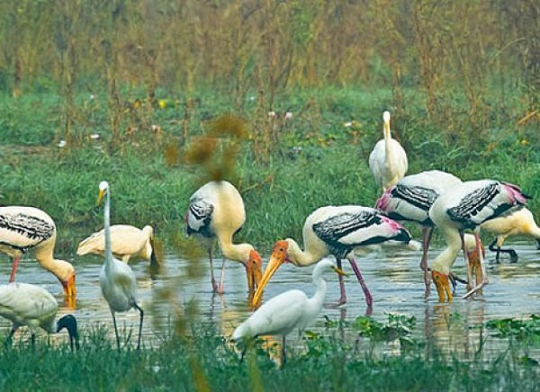 Bharatpur National Park
