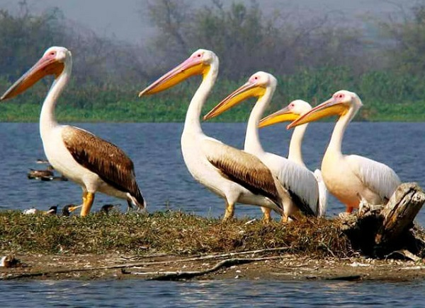 11 Days - Bird Watching Tour India