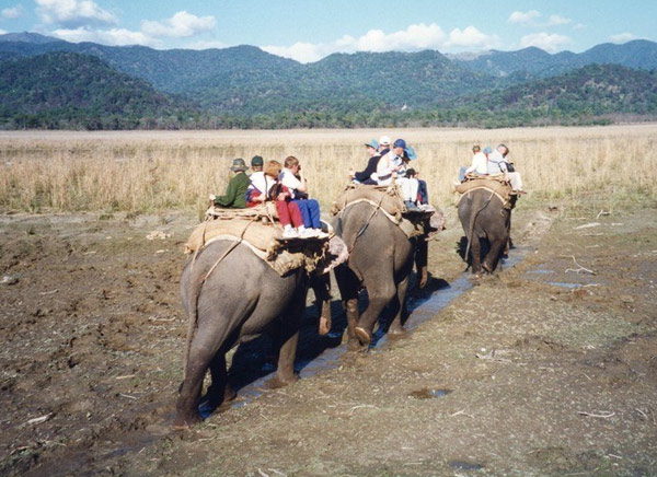 Elephant Safari in Jim Corbett National Park, Corbett Wildlife Safari