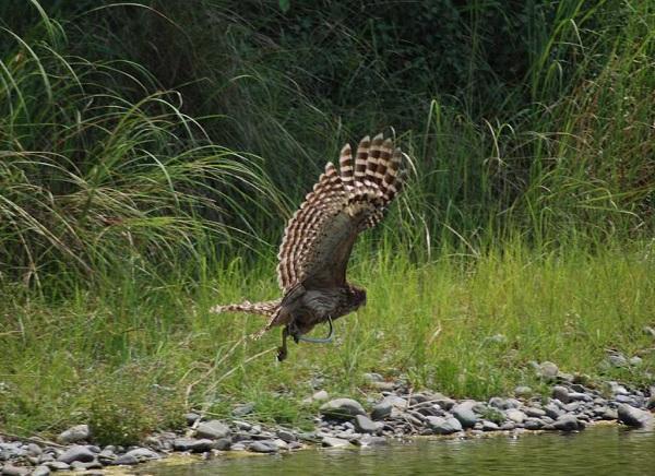 5 Days - Corbett Wildlife Tour