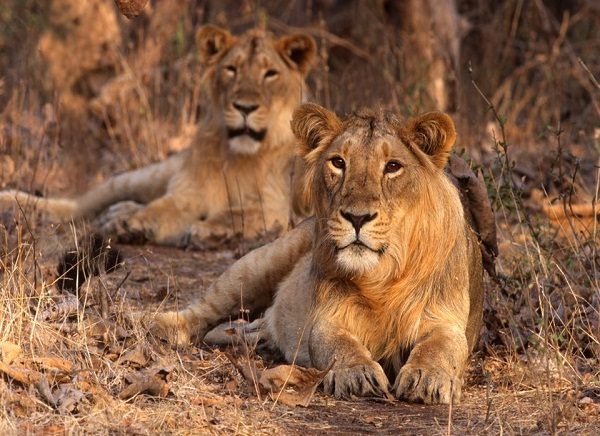 12 Days Gujarat Wildlife Tour from Mumbai