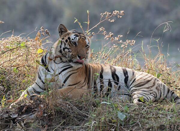 kanha wildlife sanctuary