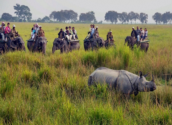 Kaziranga National Park Elephant Safari