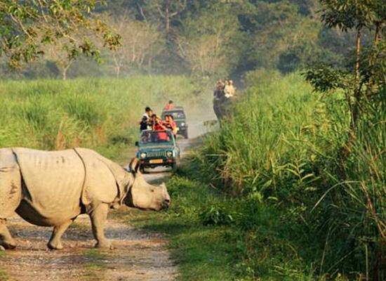 7 Days North East India Wildlife Tour