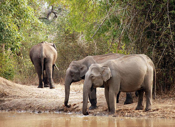 10 Days - Exclusive Nagarhole with Bandipur Tour
