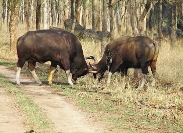 pench wildlife reserve