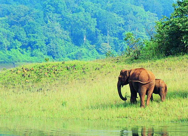 Periyar National Park - Safari Timing, How to Reach, Best