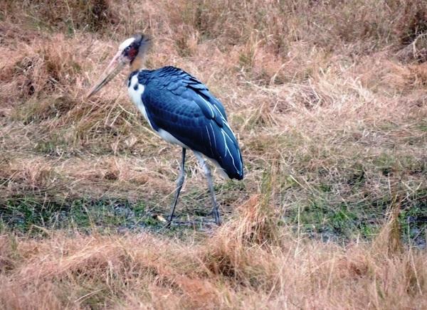 Pipariya National Park