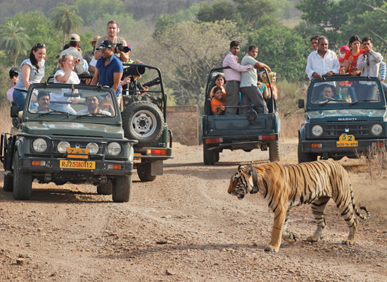 Jeep Safari at Ranthambore
