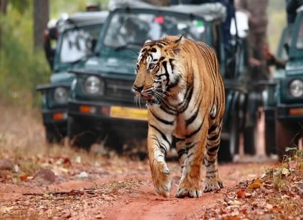 3 Days Ranthambore Tour from Jaipur