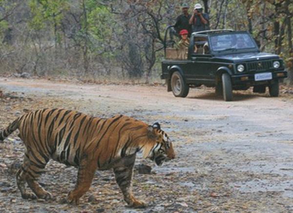 6 Days - South India Jungle Safari