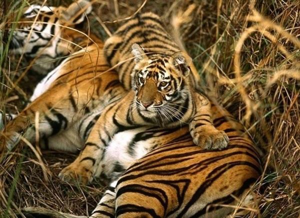 Sundarbans Park