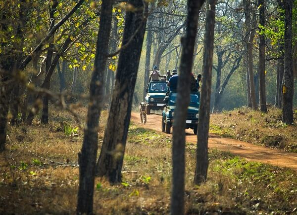 Tadoba Wildlife Sanctuary