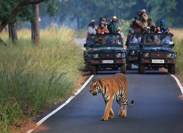 4 Nights 5 Days Tadoba and Pench Wildlife Tour