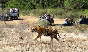 16 Days India Wildlife & Culture Tours