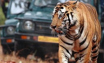 Ramthambore tour by Maharajas Express