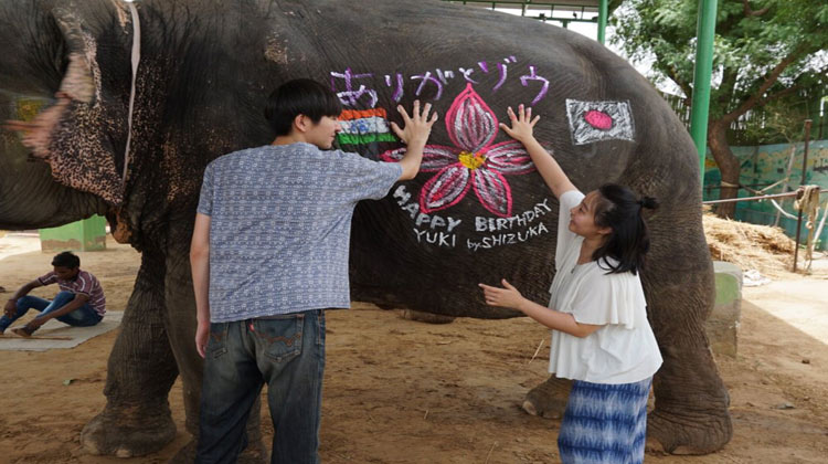 Elephant Camp at Jaipur