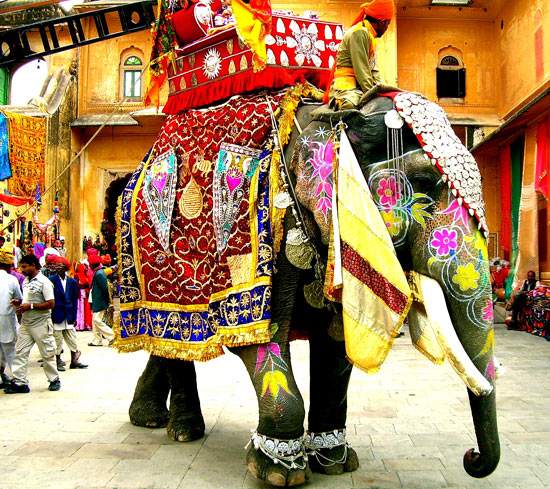 A Day with Elephants - Jaipur