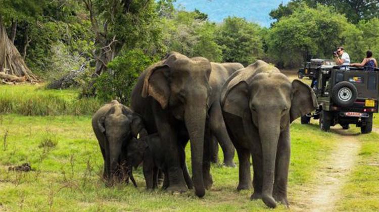 Elephant at Ranthambore Wildlife
