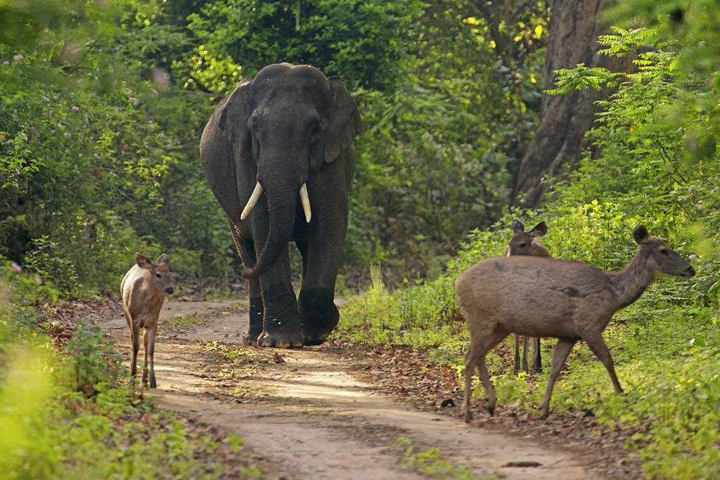 Elephant Deer at Corbett