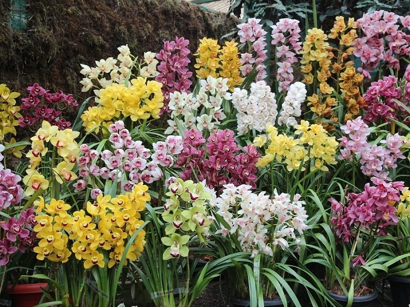 Flower Show, Gangtok