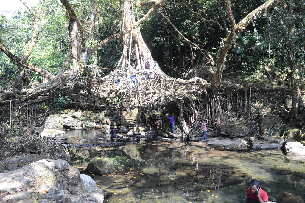 Living Root Bridge Shillong