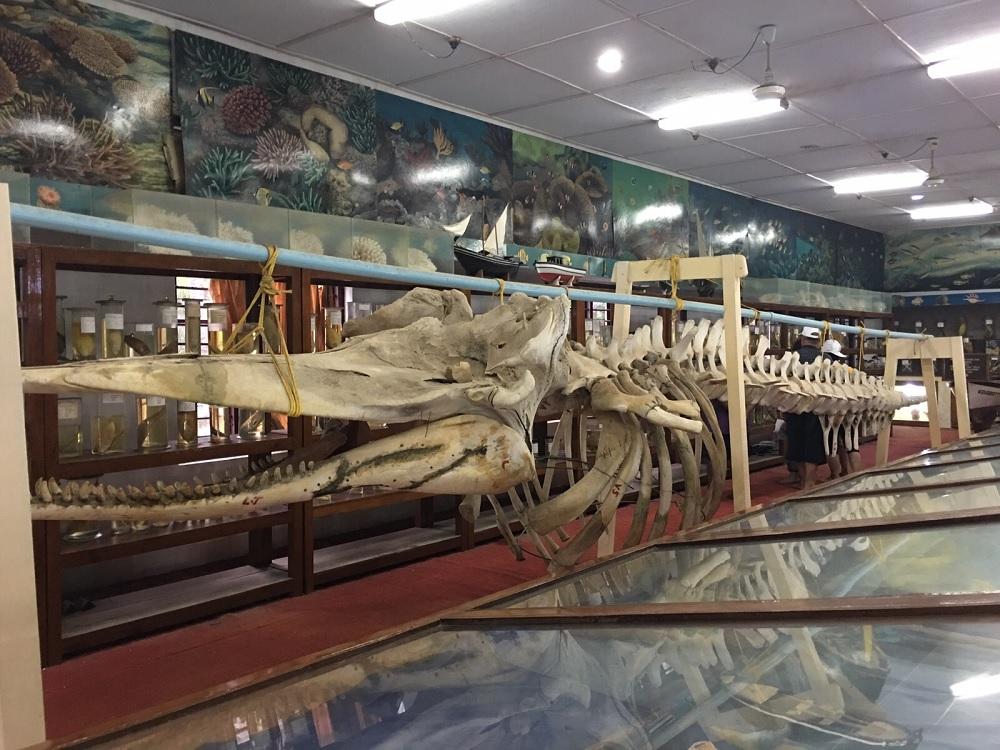 Marine Museum Agatti