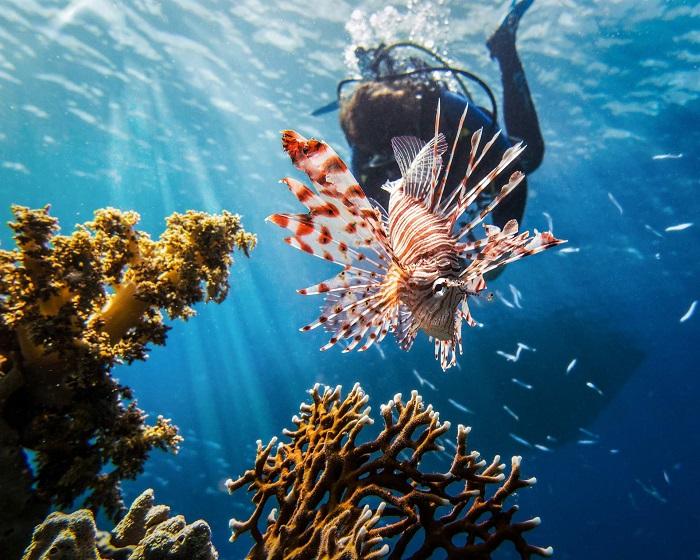 Scuba Diving at Agatti