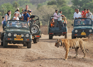 15 Nights 16 Days India Wildlife and Culture Tours - Itinerary Packages
